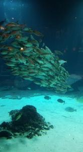 Aquarium at Atlantis