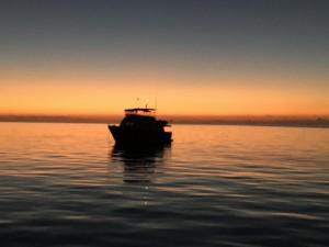 Smartini-at-Mangrove-Cay-at-sunset-close-up